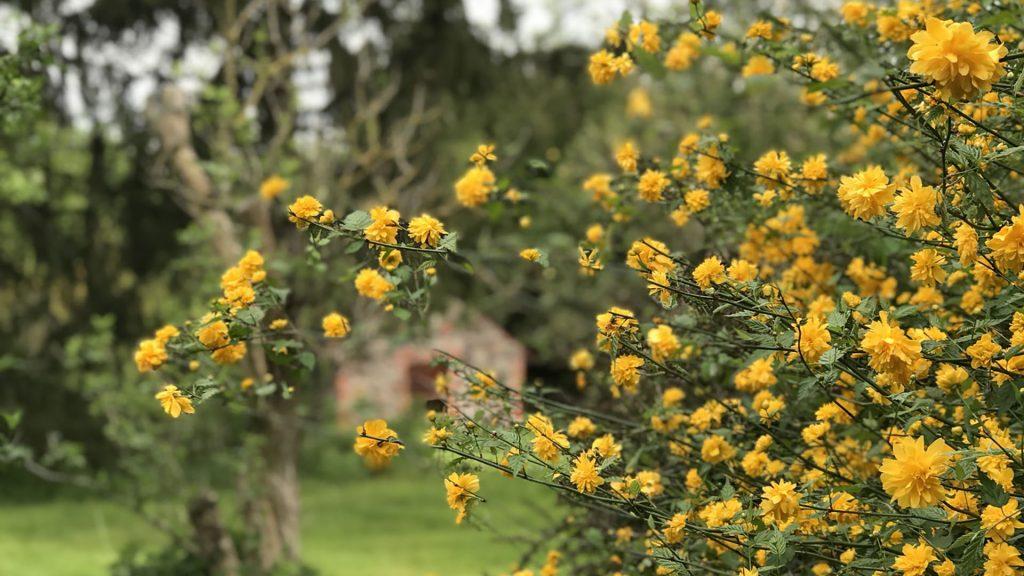 Gut Leben im Landresort Birkholz gelbe Blumen