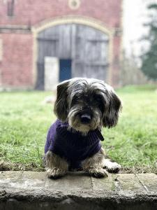 Gut Leben im Landresort Birkholz sitzender kleiner Hund