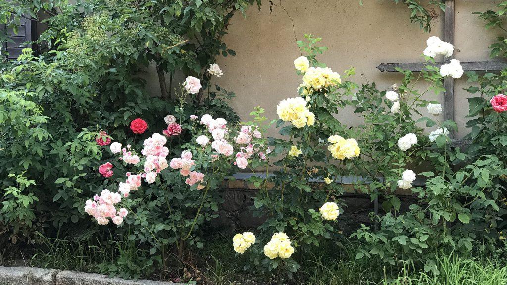 Gut Leben im Landresort Birkholz Rosenbusch