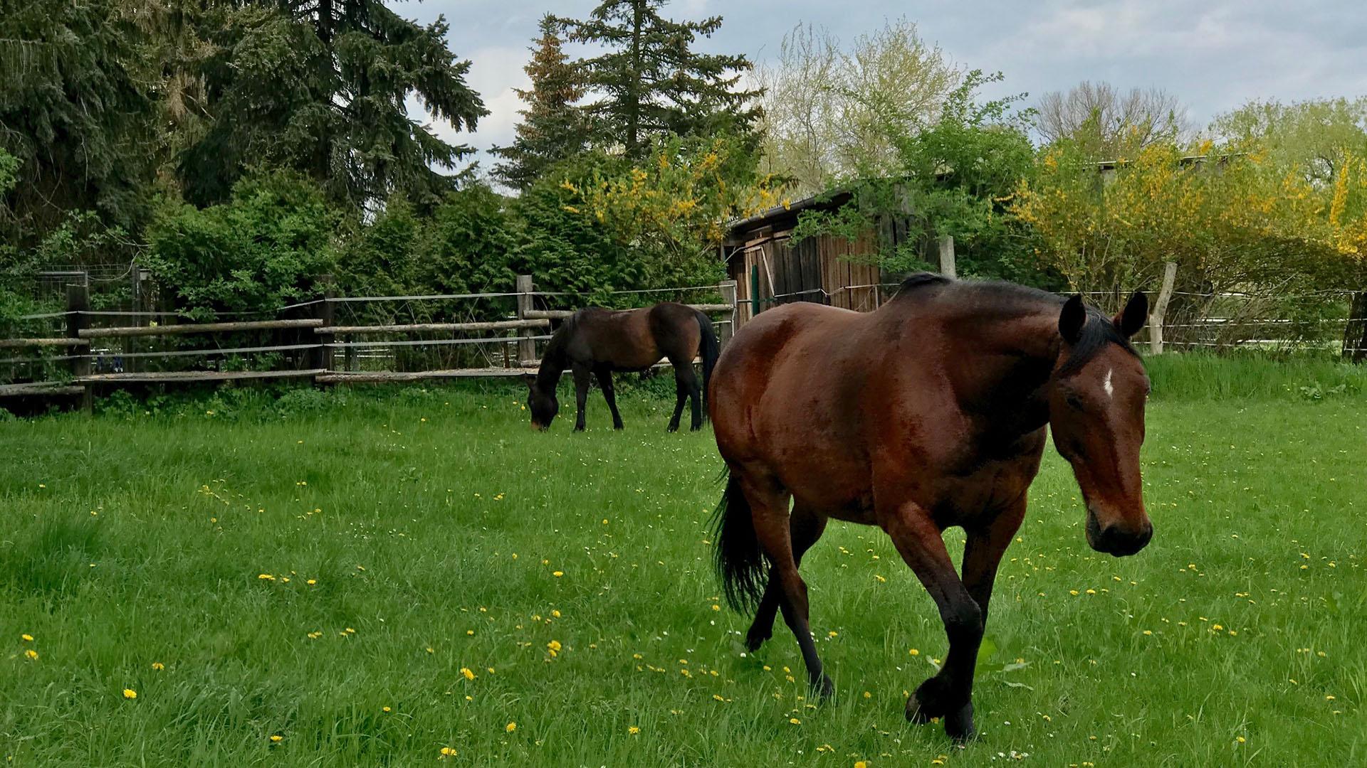 Gut Leben im Landresort Birkholz Pferde reiten