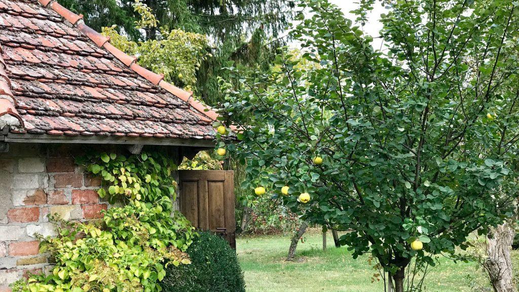 Gut Leben im Landresort Birkholz Veranstaltungen Apfelbaum im Garten
