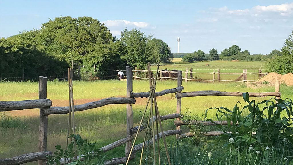 Gut Leben im Landresort Birkholz auf der Wiese