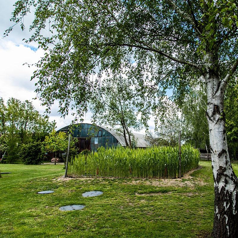 Gut Leben im Birkholzer Landresort Besuch ins Gewächshaus