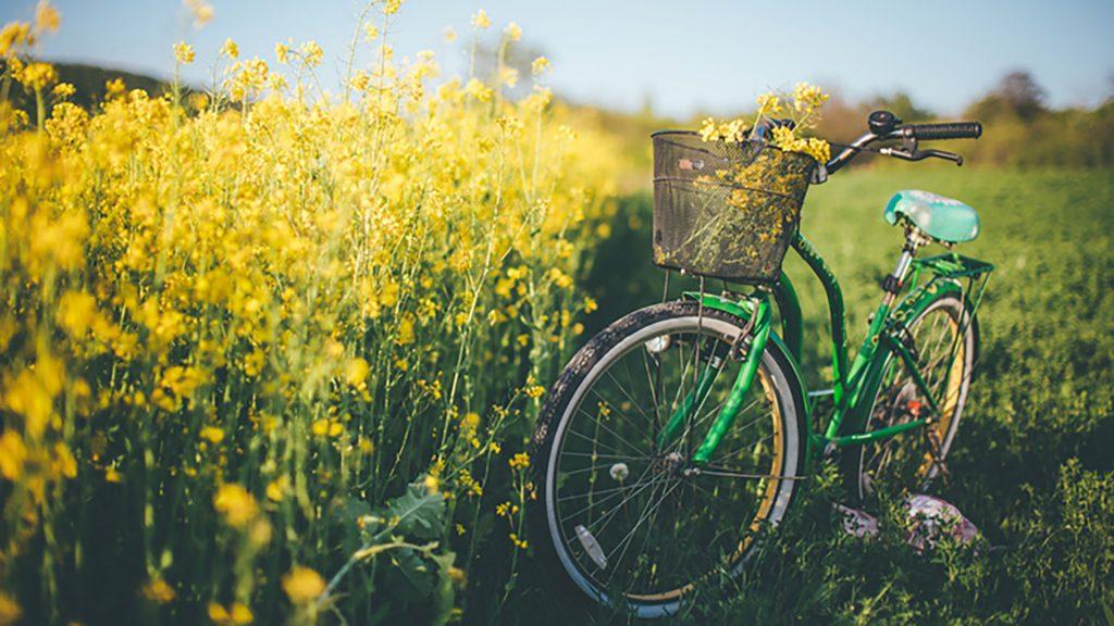 Gut Leben im Birkholzer Landresort ein grünes Rad neben einem Rapsfeld