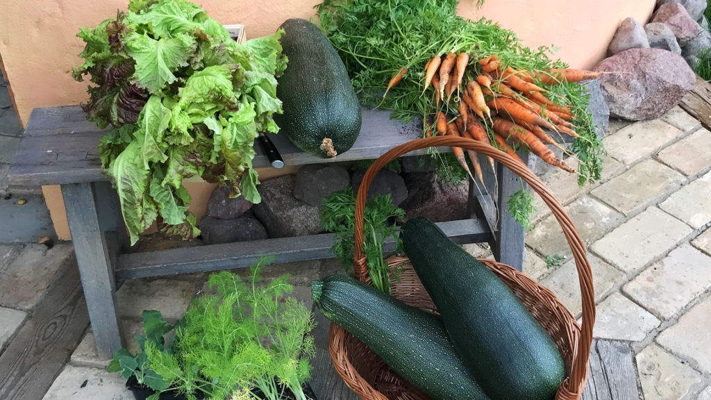 Gut Leben Landresort Birkholz frisches Gemüse